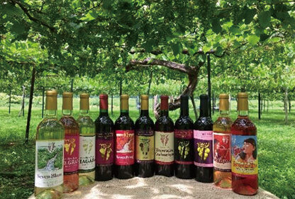 【中止】〈小坂町〉小坂七滝ワイン&BBQフェス2021▷純小坂産のワインとBBQを堪能