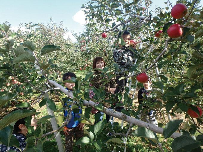 〈三種町〉三種町秋のリンゴ狩り体験▷リンゴの甘い香りに包まれながらもぎ取り体験できる